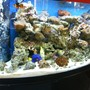 72 gallons saltwater fish tank (mostly fish, little/no live coral) - Antoher pic of my tank a little less blury