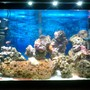 20 gallons saltwater fish tank (mostly fish, little/no live coral) - My 1st Saltwater Tank!!!!