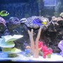 150 gallons saltwater fish tank (mostly fish, little/no live coral) - Front View