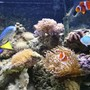 11 gallons saltwater fish tank (mostly fish, little/no live coral) - fts