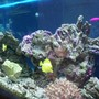 120 gallons saltwater fish tank (mostly fish, little/no live coral) - 120 gallon tank