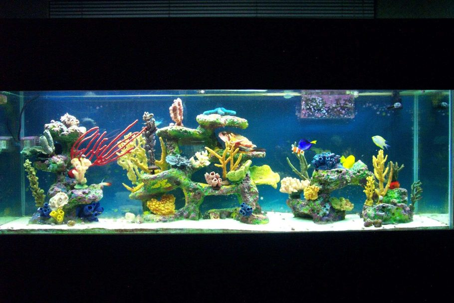 Patled 39 s saltwater fish tanks photo id 11892 full for 150 gallon fish tank dimensions