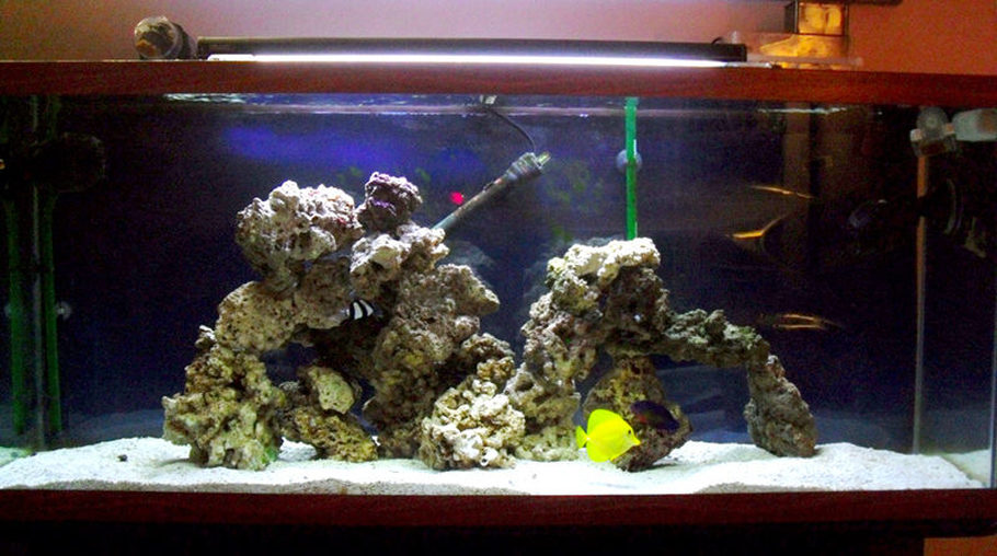 Boss5468s Saltwater Fish Tanks Details And Photos
