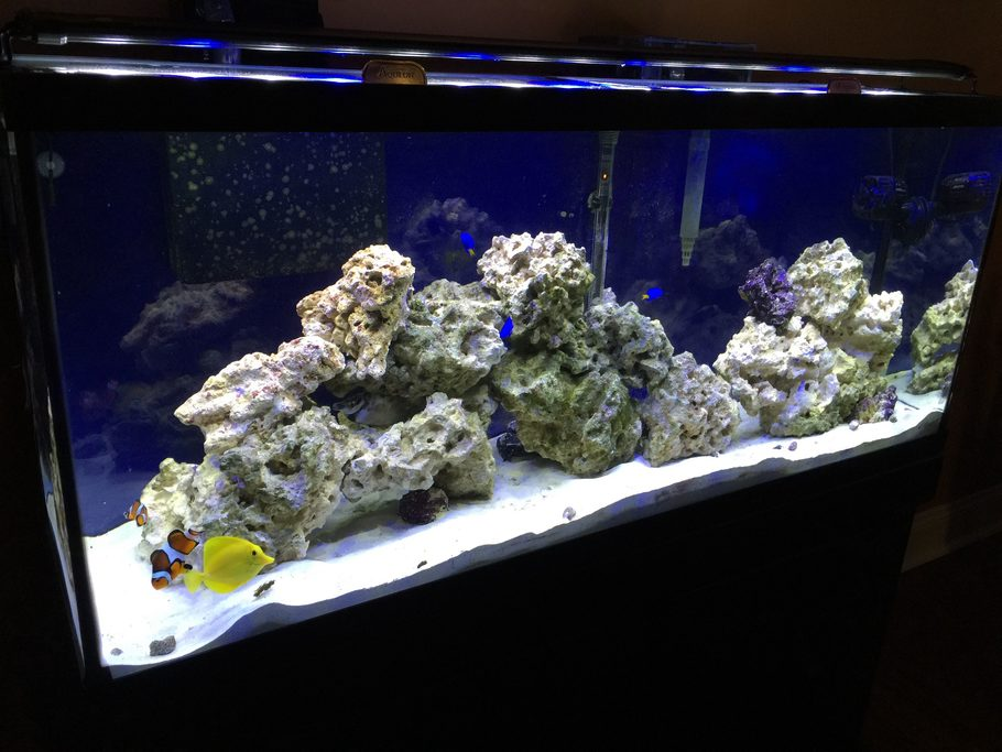 Most Beautiful Saltwater Fish Tanks 2015
