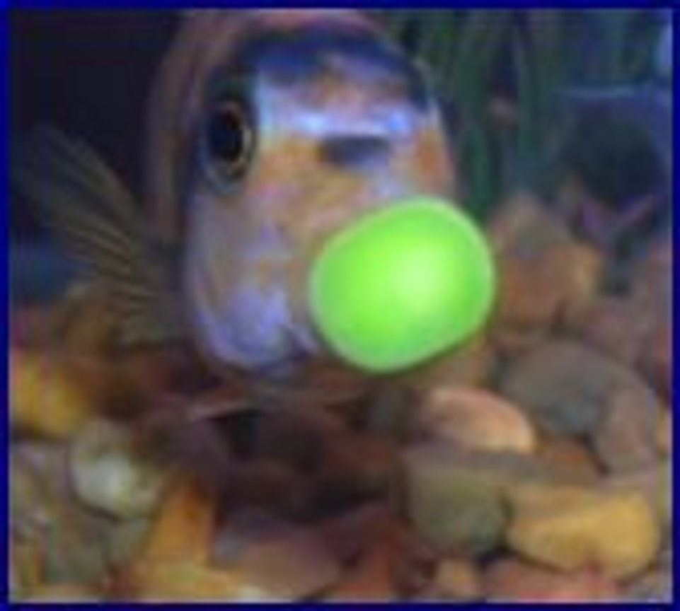 "freshwater fish stocking in 55 gallons tank - mmmmmmmmmmm,,,,, good PEA""S,,, MA spoiles me, please help me ID FISH.."