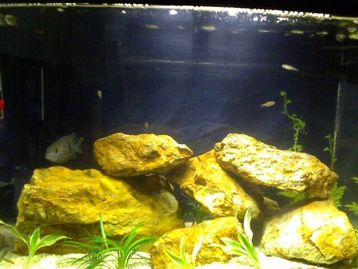 freshwater fish stocking in 12 gallons tank - Eclipse System 12