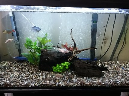 freshwater fish stocking in 20 gallons tank - Rate my tank!