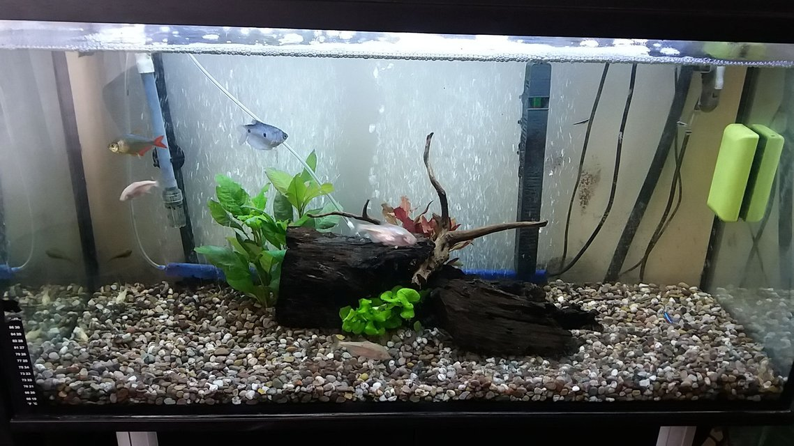 Rated #13: Freshwater Fish Stocking In 20 Gallons Tank - Rate my tank!