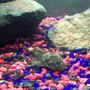 freshwater fish stocking in 250 gallons tank - Lola