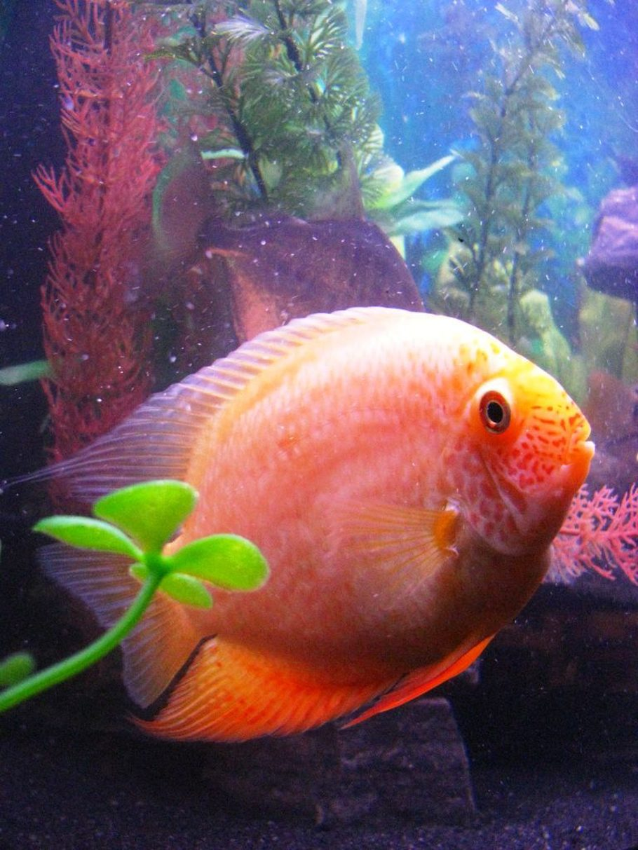 Myklein2\'s Freshwater Fish Photo (ID 31178) - Full Version ...