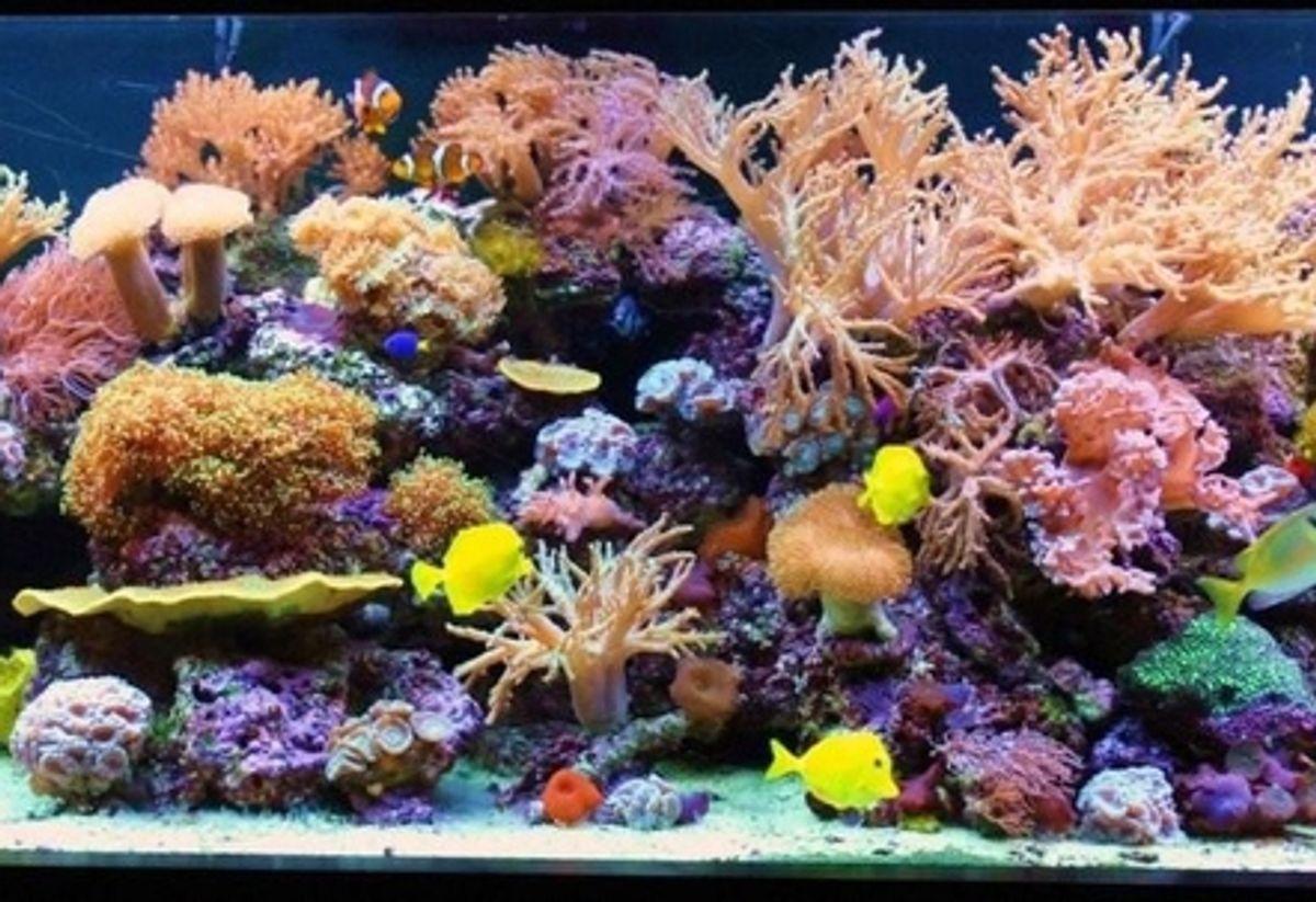 Common Myths And Problems Regarding Nano Reef Tanks