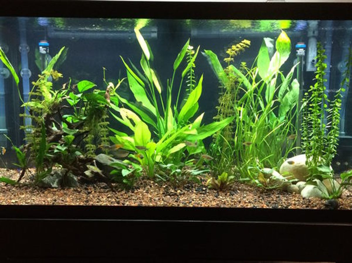 Can A Routine Water Change Kill Your Fish