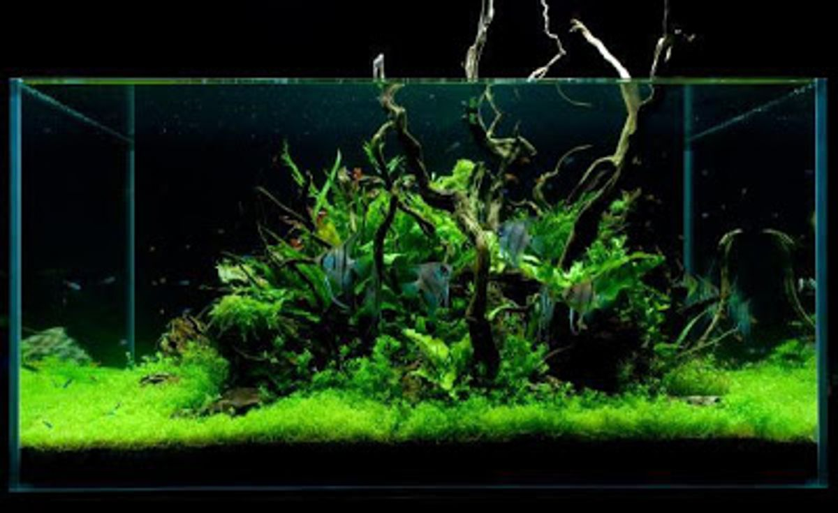 Tank For Large Freshwater Fish