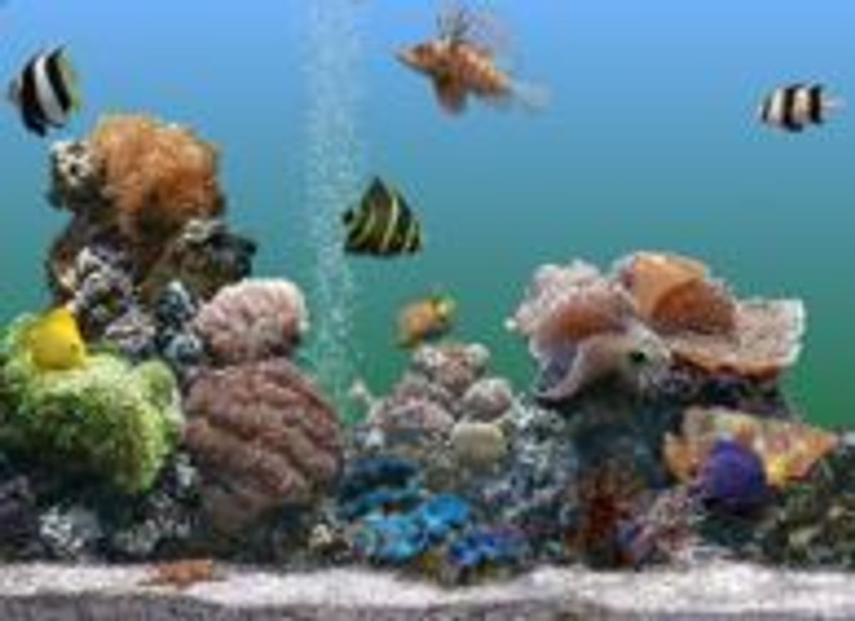 Aquarium Screensaver Ratemyfishtank