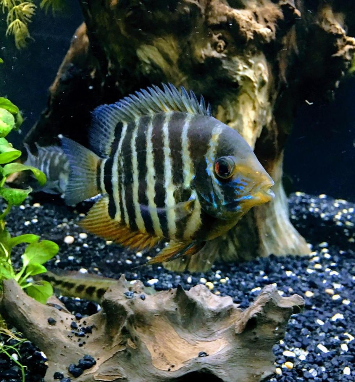 All About Tropical Fish Tanks Ratemyfishtank Com