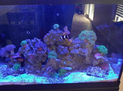 Rated #3: Saltwater Fish Stocking In 65 Gallons Tank - Ocean in my Home