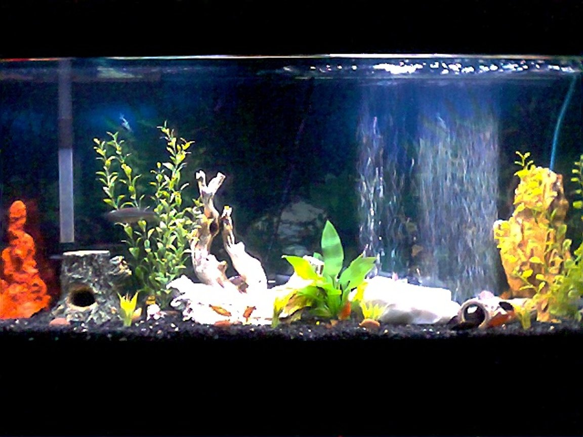 freshwater fish tank (mostly fish and non-living decorations) - 55 gallon community tank.