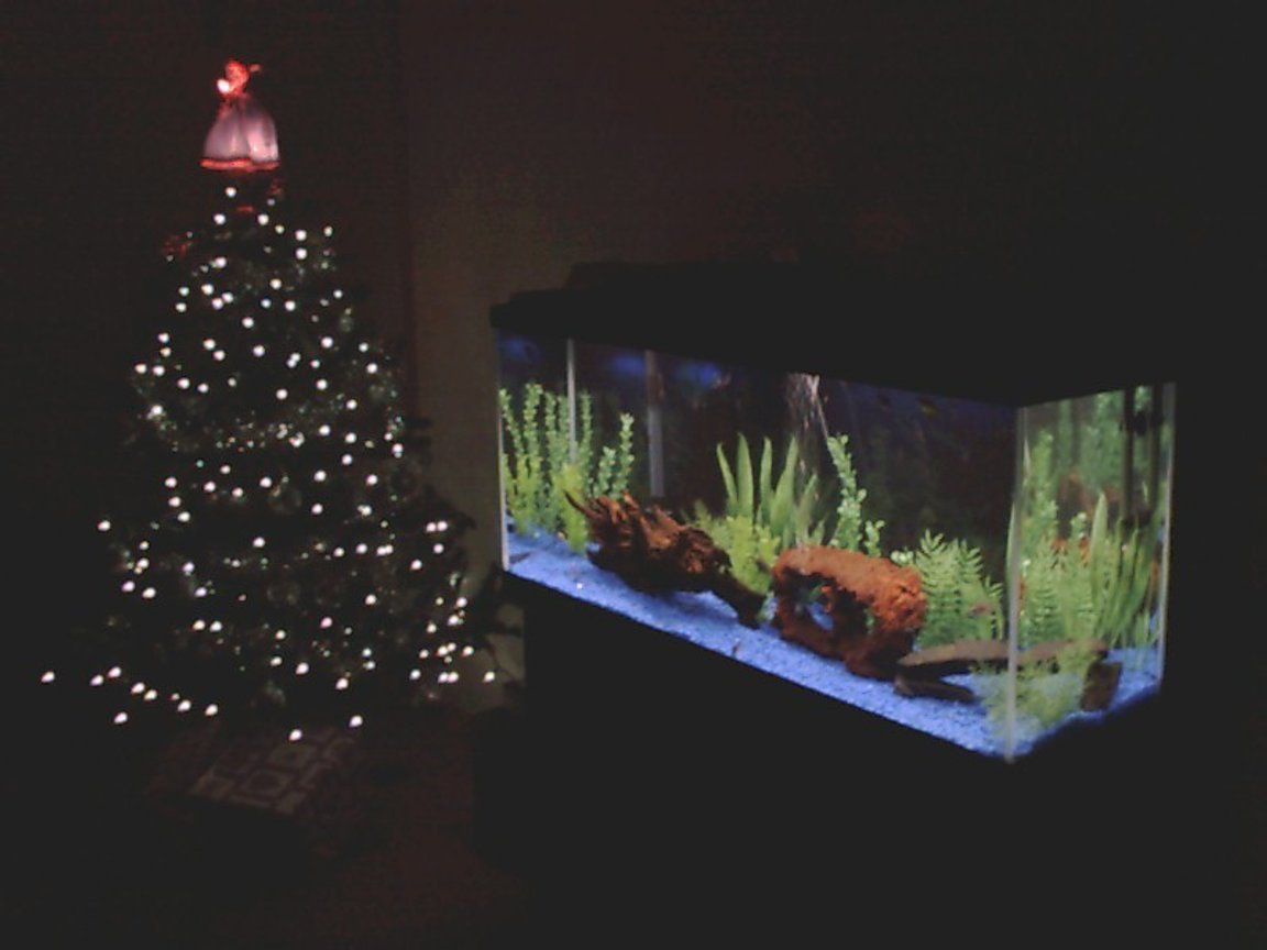 freshwater fish tank (mostly fish and non-living decorations) - 60 Gallon Fresh water tank