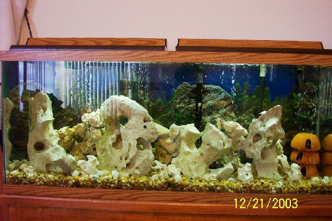 55 gallons freshwater fish tank (mostly fish and non-living decorations) - 55 gallon Tang Tank
