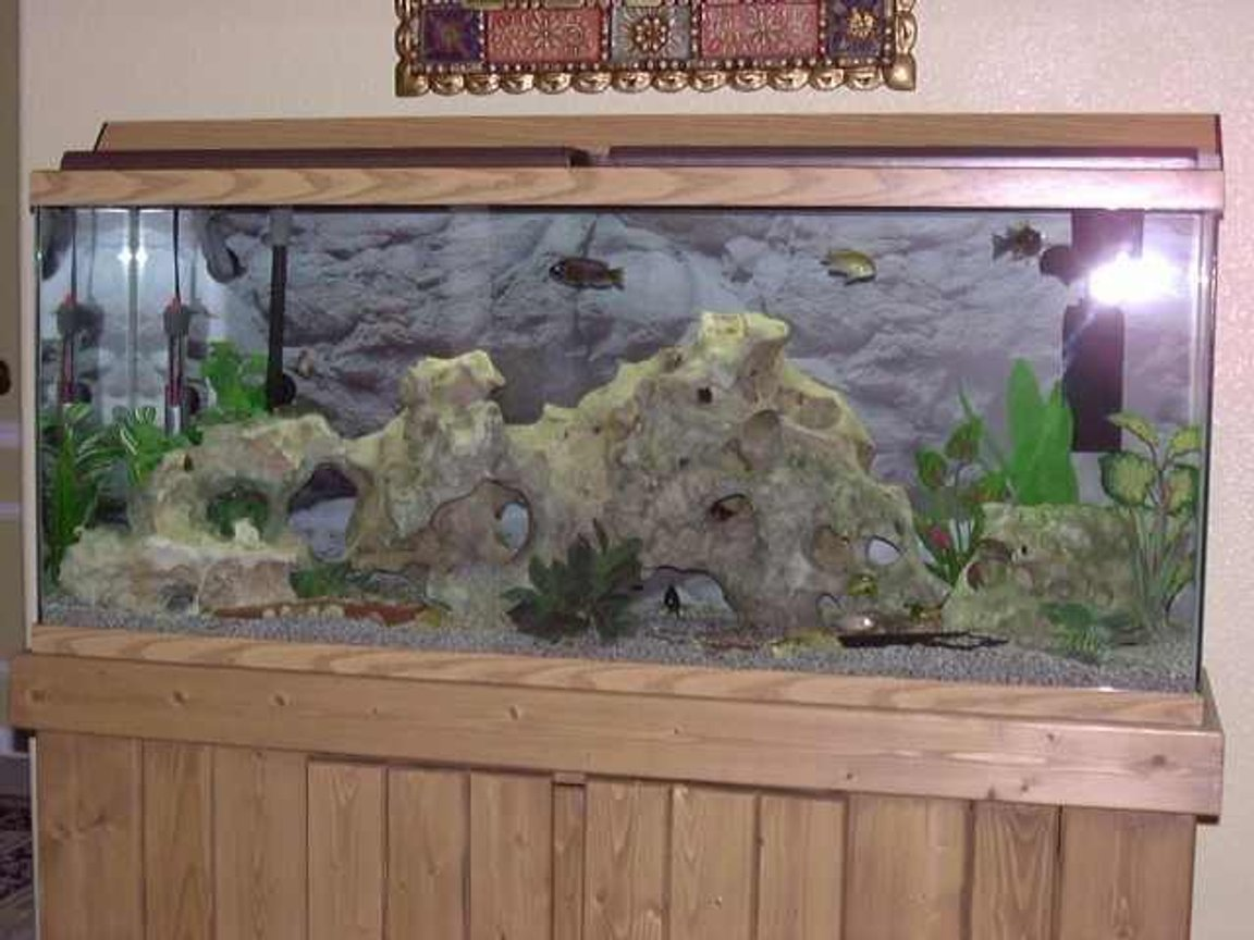 freshwater fish tank (mostly fish and non-living decorations) - African Cichlids
