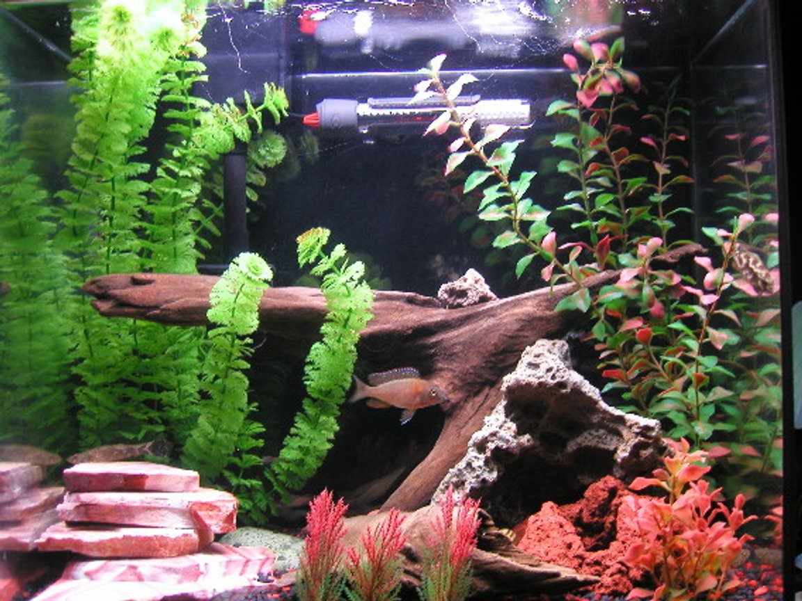 freshwater fish tank (mostly fish and non-living decorations) - 15 Gal. Tall w/ Eclipse. 2 African Cichlids, 2 Marble Gobies, 1 Syn Cat(fish), 2 Red claw crabs, 2 kuhli loaches.