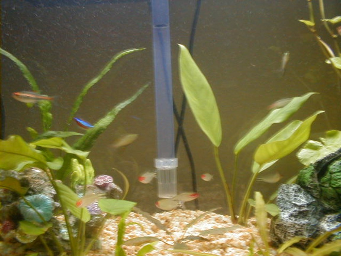 freshwater fish tank (mostly fish and non-living decorations) - I am turning a freshwater tank into saltwater. I need help with lots of questions.
