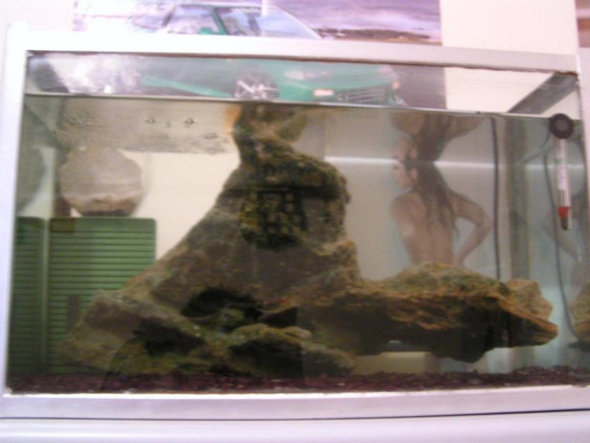 freshwater fish tank (mostly fish and non-living decorations) - Begginers tank...