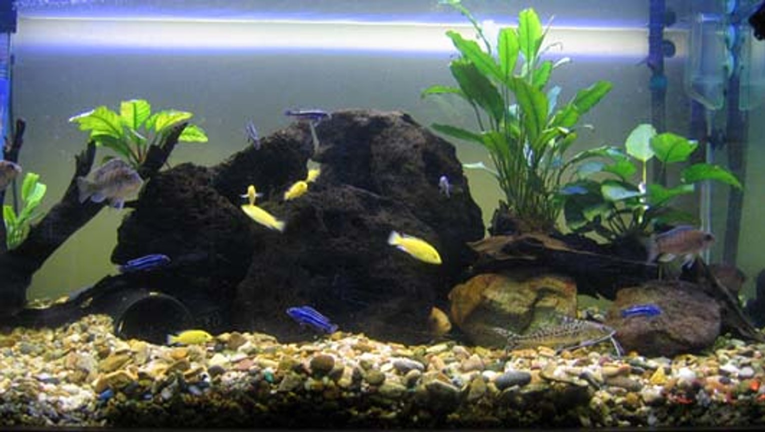 130 gallons freshwater fish tank (mostly fish and non-living decorations) - just established 4ftx2ftx2ft prime 30 canister filter with undergravel filtration with large powerhead. 2x 4ft fluro lights 3 large volcanis rocks assorted tubing 4 anubis on driftwood 2 pictus cats 5 bristlenose 6 electric yellow 7 maingano 3 electric blue 1zebra