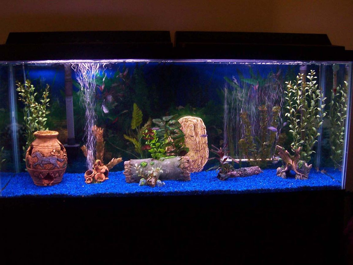 55 gallons freshwater fish tank (mostly fish and non-living decorations) - my fish tank