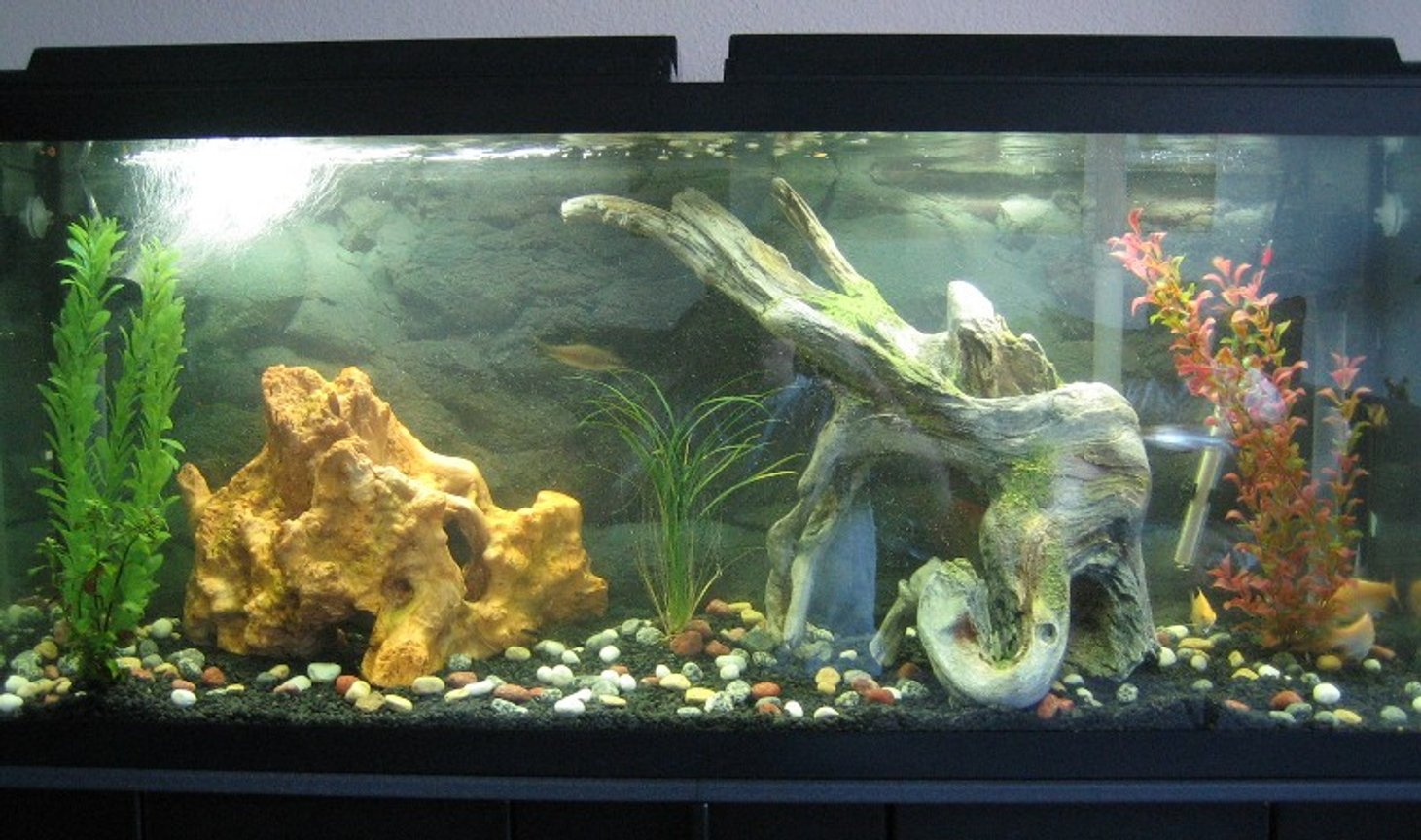 55 gallons freshwater fish tank (mostly fish and non-living decorations) - 55 Gallon Semi-Agressive Tank