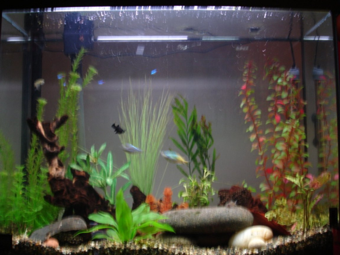 37 gallons freshwater fish tank (mostly fish and non-living decorations) - 2