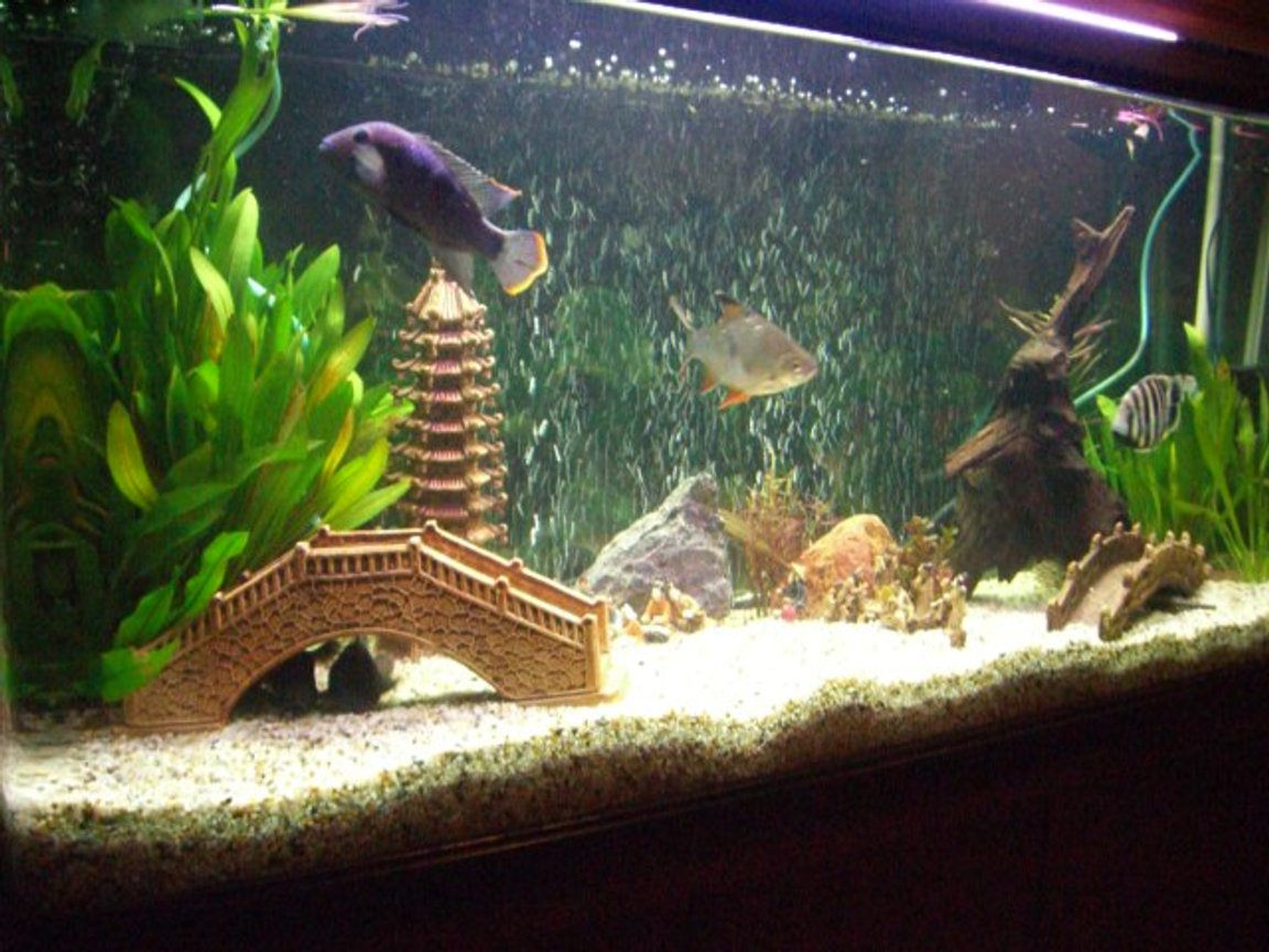 54 gallons freshwater fish tank (mostly fish and non-living decorations) - little tank in big china!!!!!!!!!