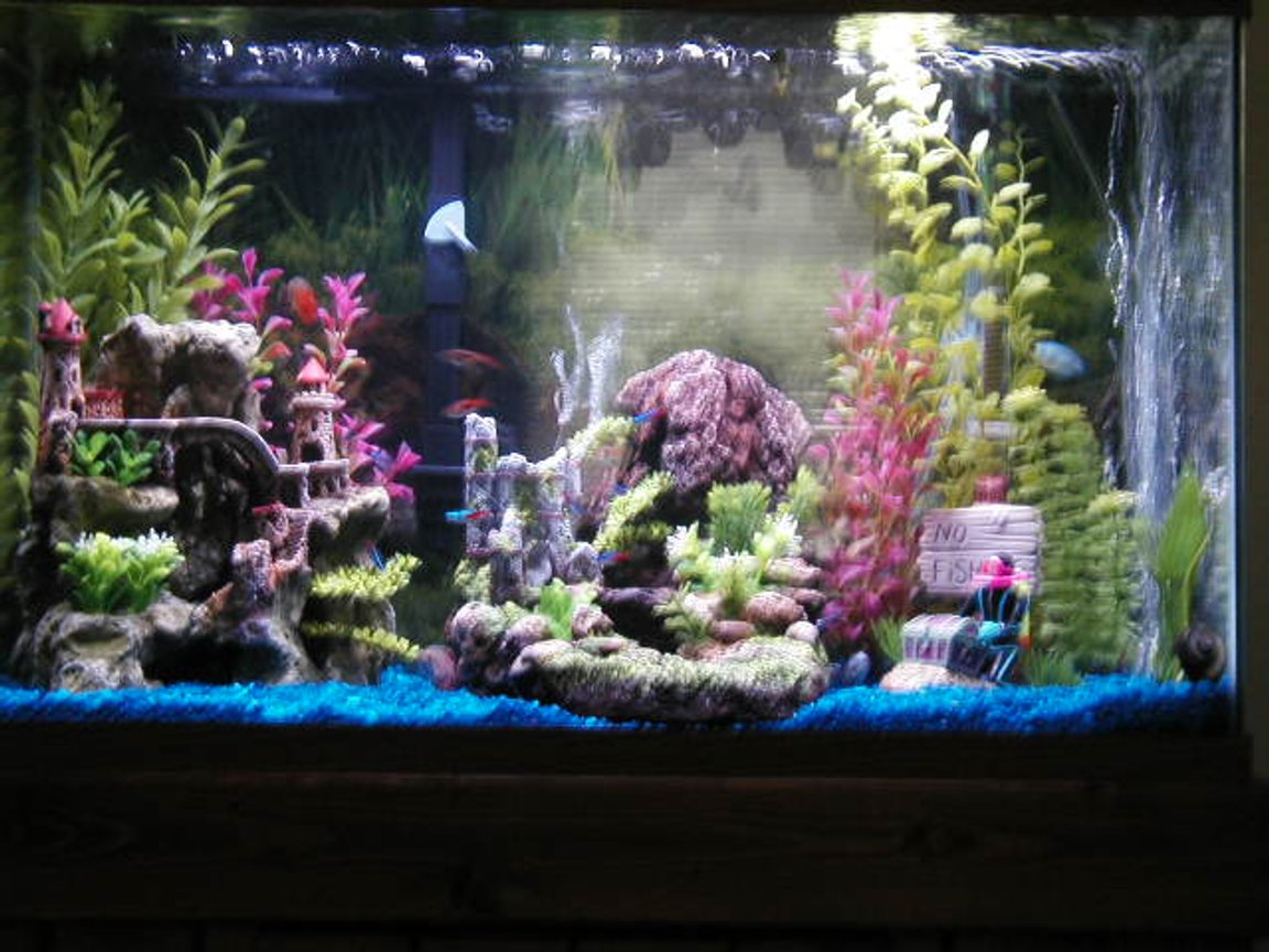 30 gallons freshwater fish tank (mostly fish and non-living decorations) - my 30