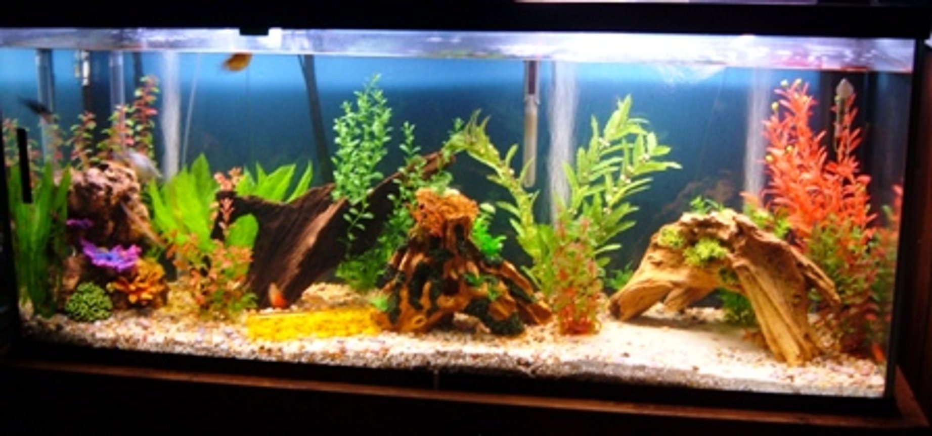120 gallons freshwater fish tank (mostly fish and non-living decorations) - 2bgk 2 redtail sharks 4gouramis 4 loaches 2lake?catfish 2swordtail 2 molly 1cobaltbluelobster 1dwarf frog 3angelfish 2plecos