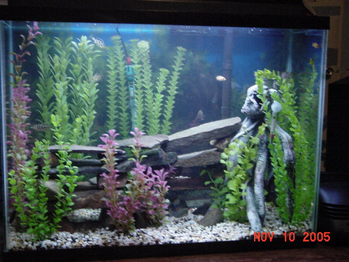 45 gallons freshwater fish tank (mostly fish and non-living decorations) - african cichlids