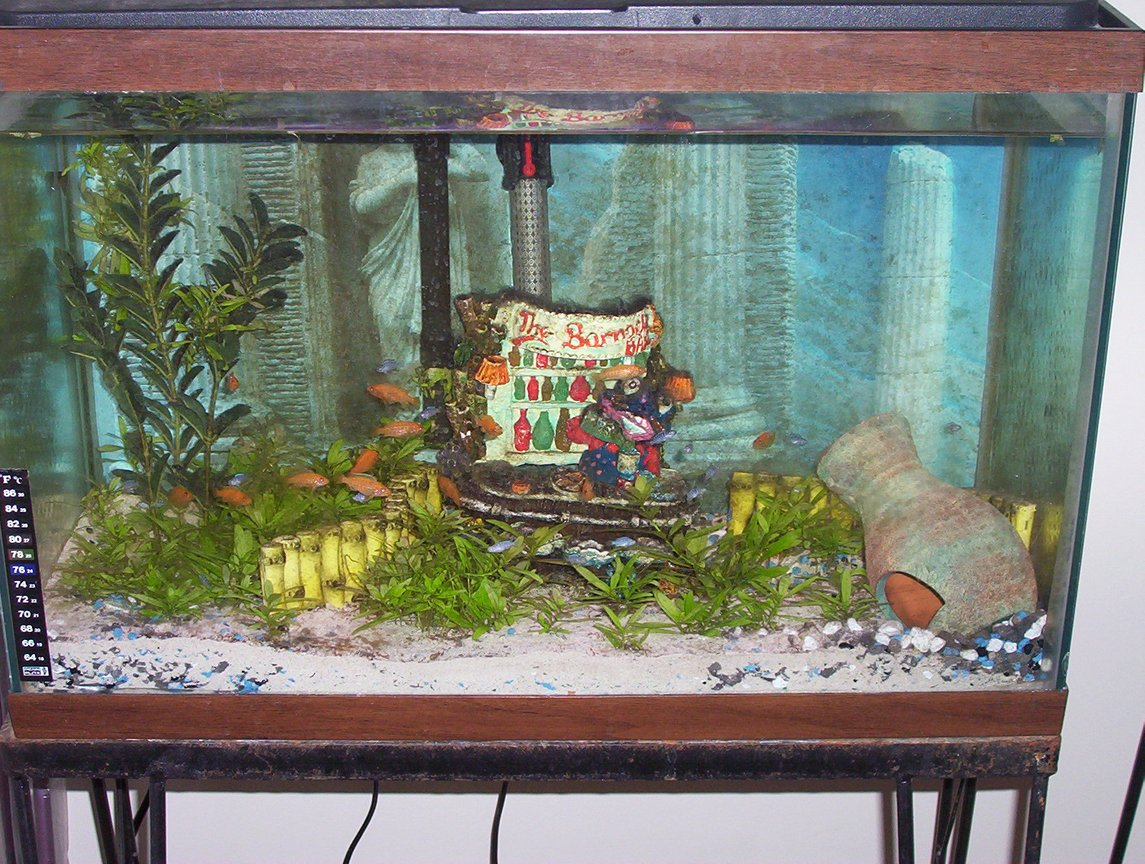 freshwater fish tank (mostly fish and non-living decorations) - my babies tank..afr. ciclids