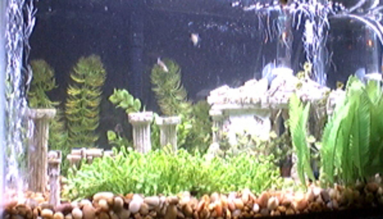 10 gallons freshwater fish tank (mostly fish and non-living decorations) - The Parthenon