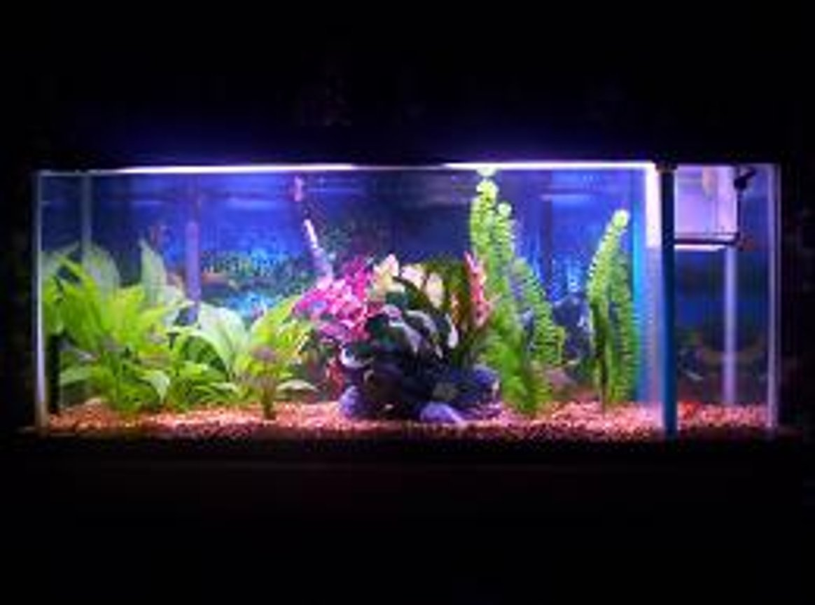 55 gallons freshwater fish tank (mostly fish and non-living decorations) - 55 ga