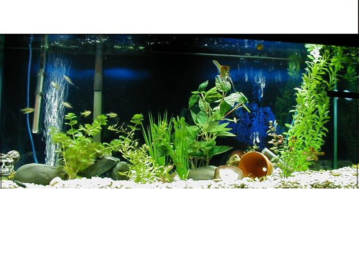 55 gallons freshwater fish tank (mostly fish and non-living decorations) - hmm i have a 45 gallon i started a bout 1 mouth a go i have two live plants and the rest are fake