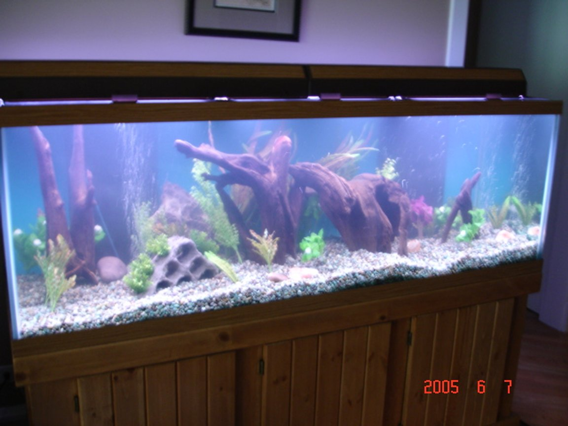 180 gallons freshwater fish tank (mostly fish and non-living decorations) - New pic.