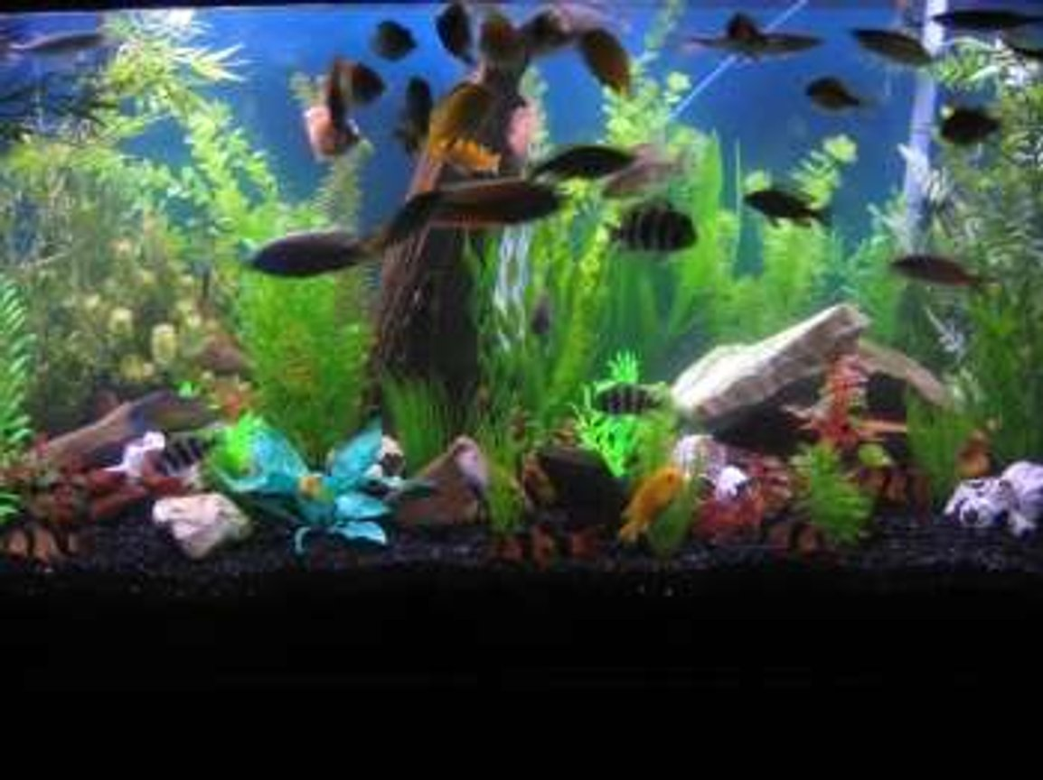 90 gallons freshwater fish tank (mostly fish and non-living decorations) - my 90!