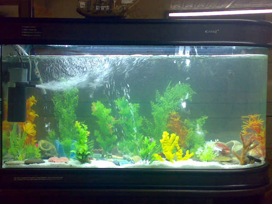 80 gallons freshwater fish tank (mostly fish and non-living decorations) - 80 gallon brand new tank