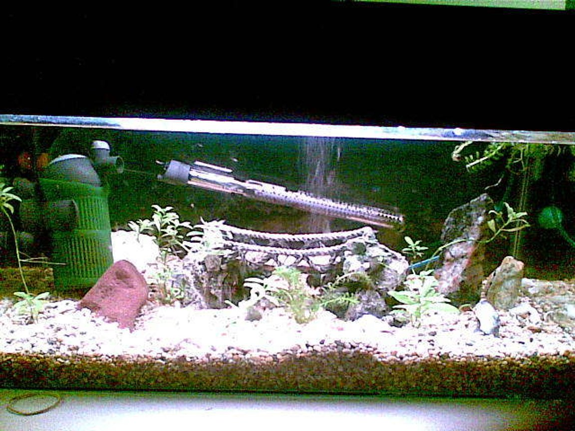 50 gallons freshwater fish tank (mostly fish and non-living decorations) - this is our 2ft baby tank, for growth and breeding selection