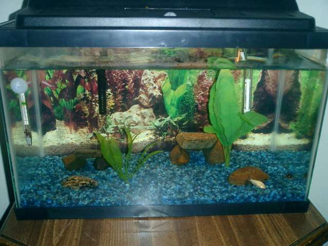 10 gallons freshwater fish tank (mostly fish and non-living decorations) - an updated picture