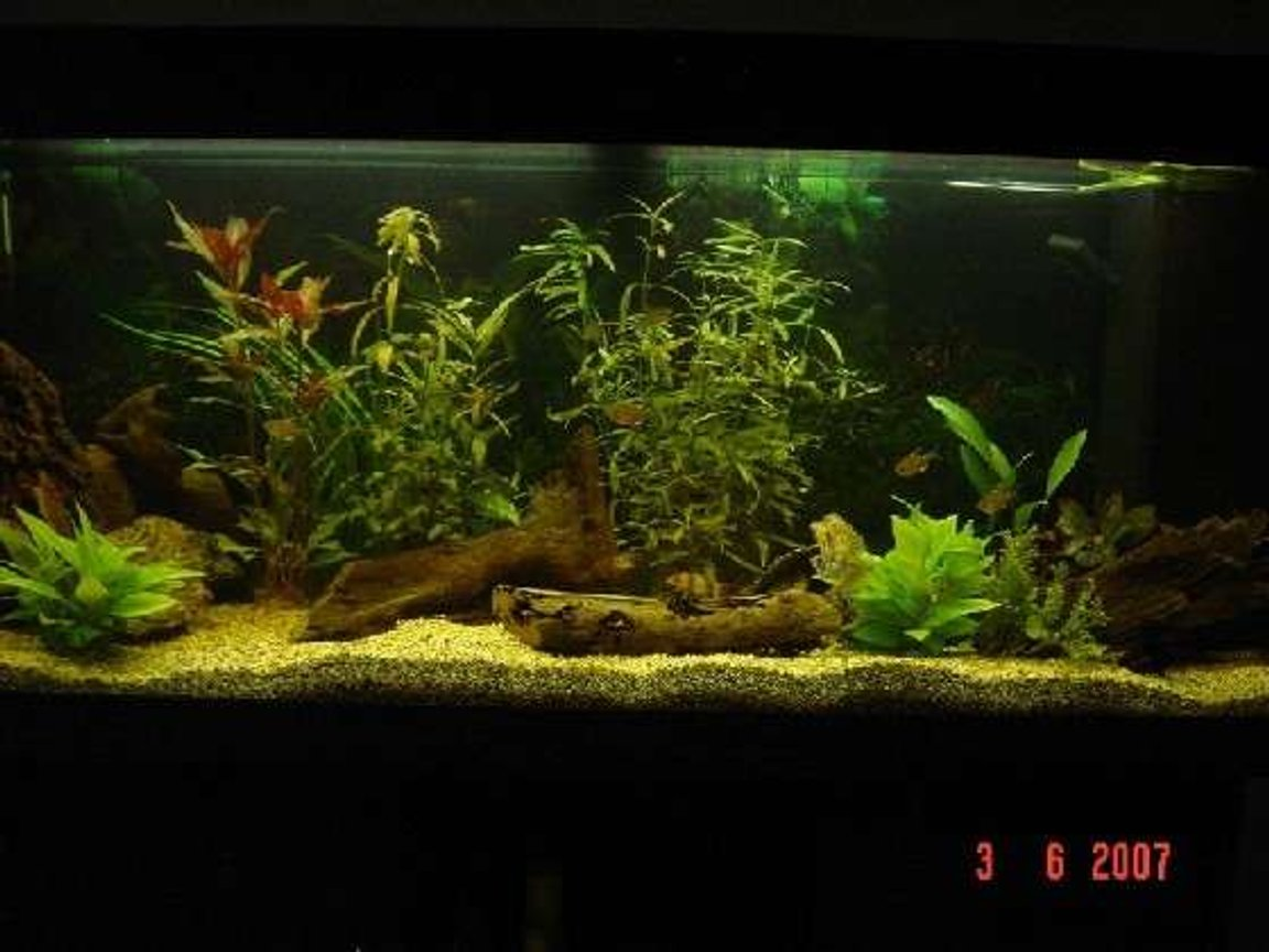 240 gallons freshwater fish tank (mostly fish and non-living decorations) - my tank.
