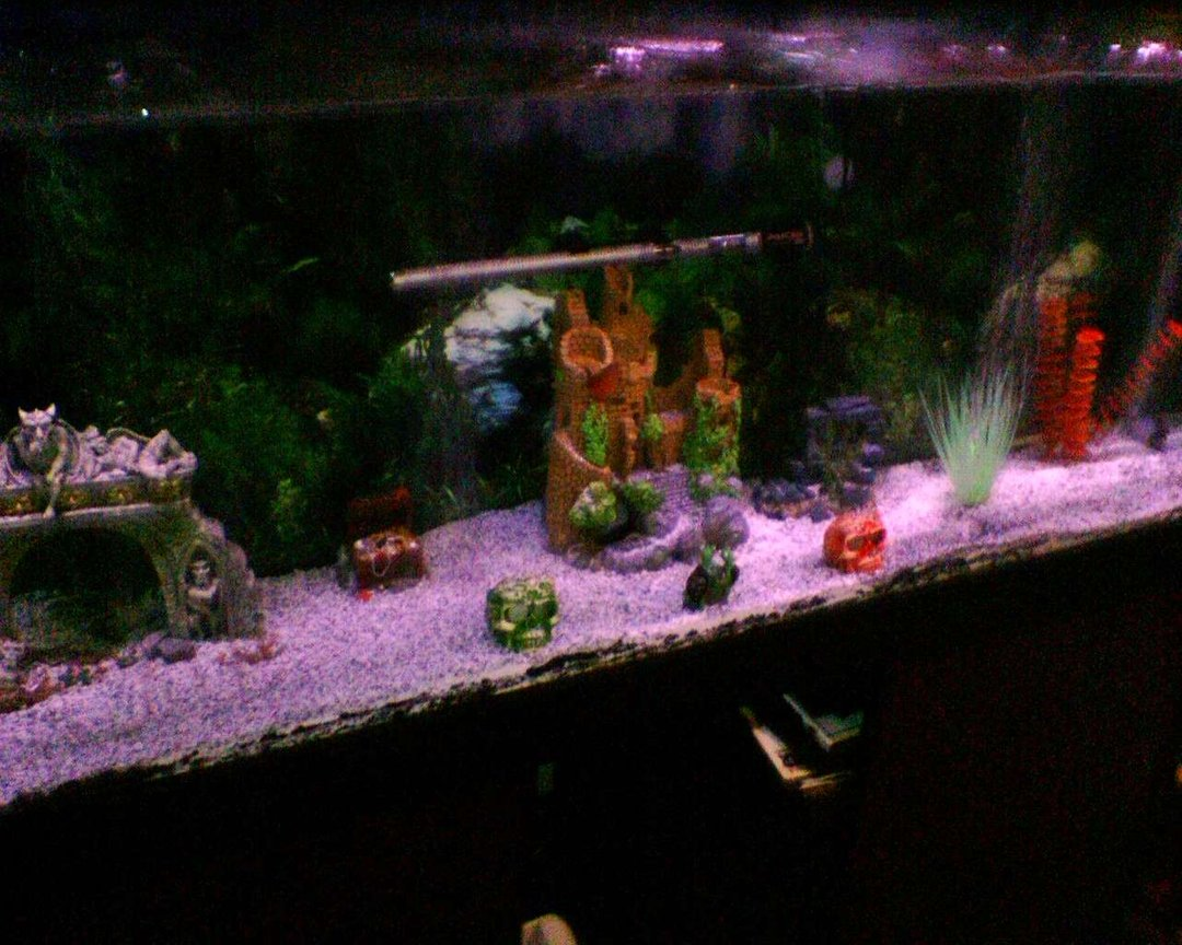 55 gallons freshwater fish tank (mostly fish and non-living decorations) - side view