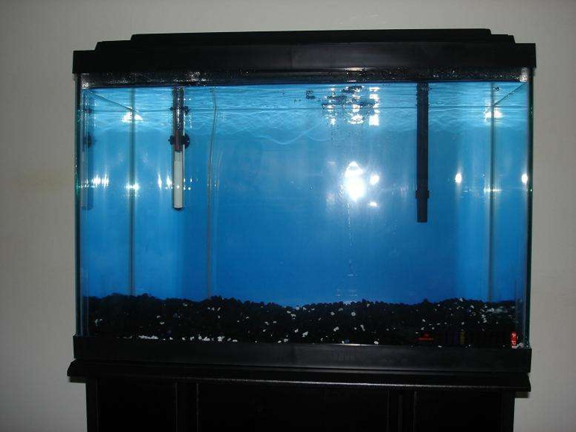 20 gallons freshwater fish tank (mostly fish and non-living decorations) - IDEAS PLEASE