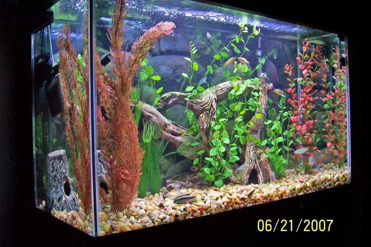 29 gallons freshwater fish tank (mostly fish and non-living decorations) - Thanks for leaving a comment after you vote! Always looking for input on my tank's hardware, stock, decor and/or pic! - Mike