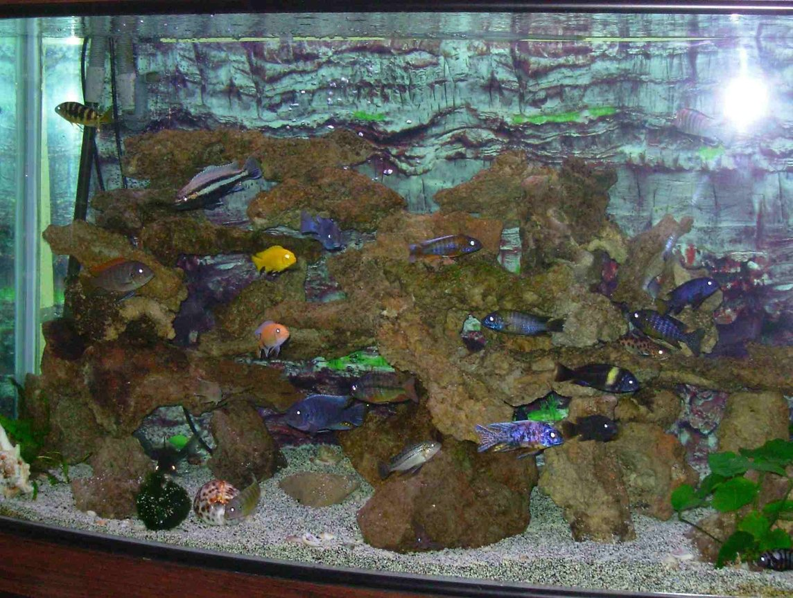 90 gallons freshwater fish tank (mostly fish and non-living decorations) - 90 gallon bowfront tank and african cichlids