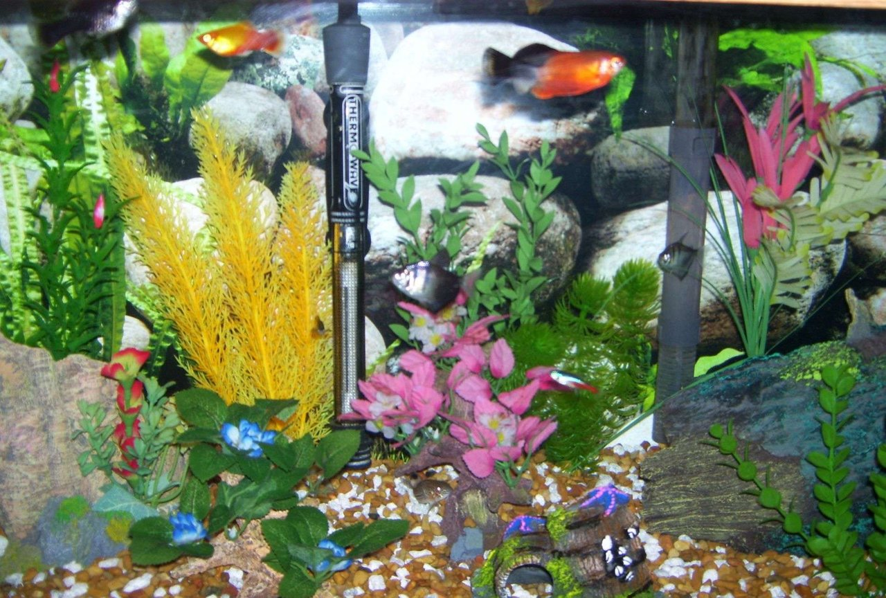20 gallons freshwater fish tank (mostly fish and non-living decorations) - close up, I like color
